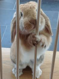 Easter at theprison